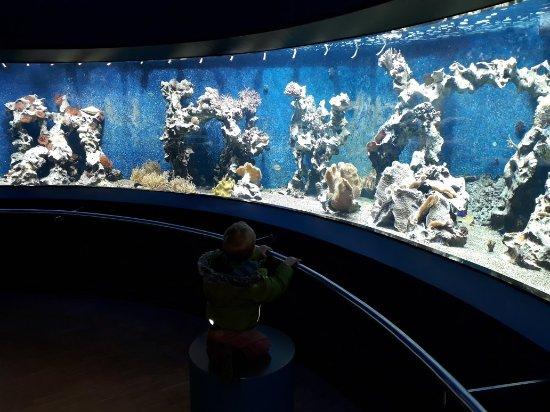 Аква-зоопарк и музей Лёббекке