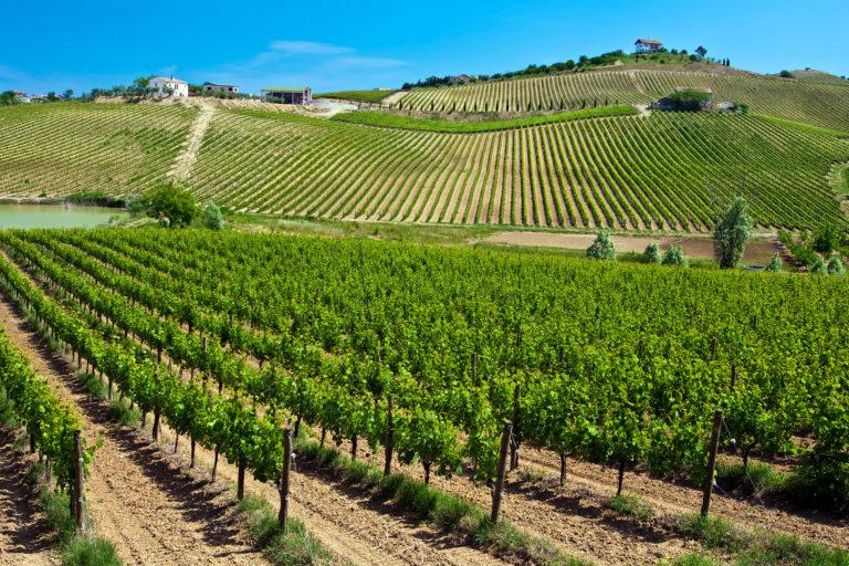 виноградники Монтепульчано