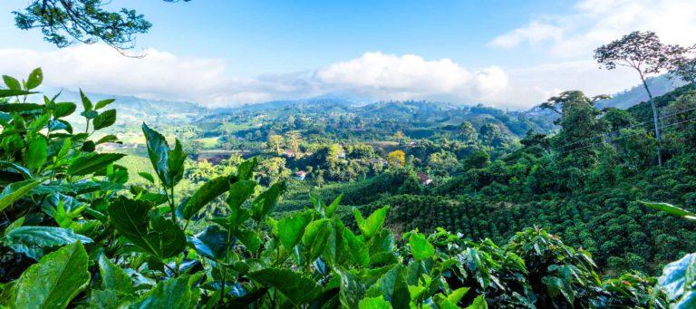 кофейная плантация в Колумбии