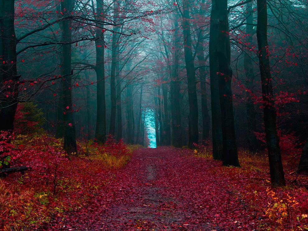 Достопримечательности Германии: Чёрный лес Шварцвальд