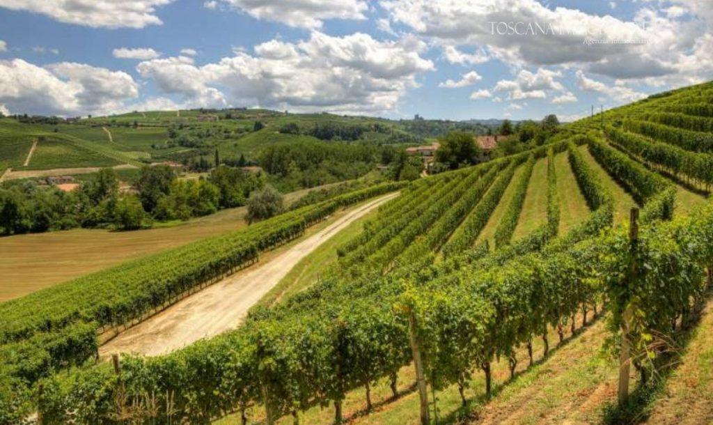 Производители вина Кьянти
