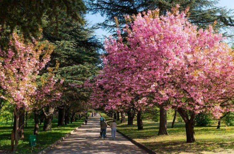 Ботанические феномены