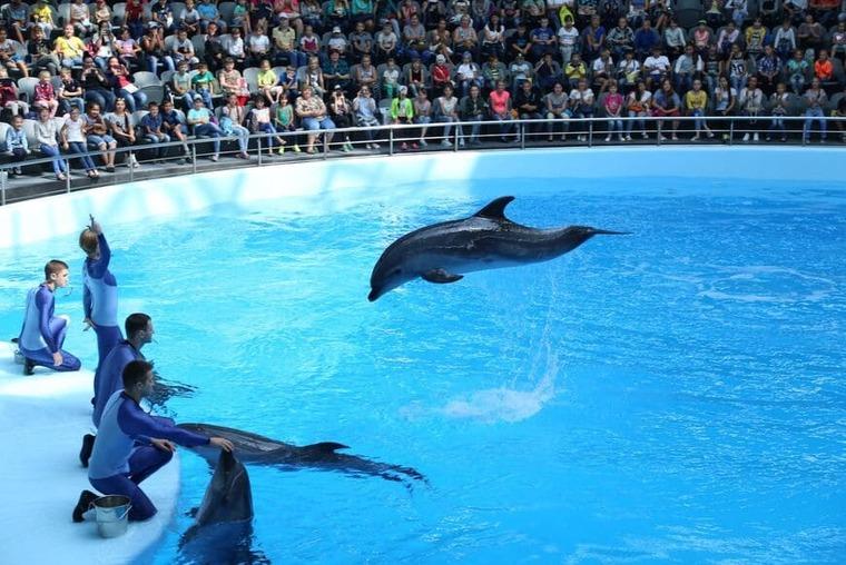 Дельфинарий в Новосибирске