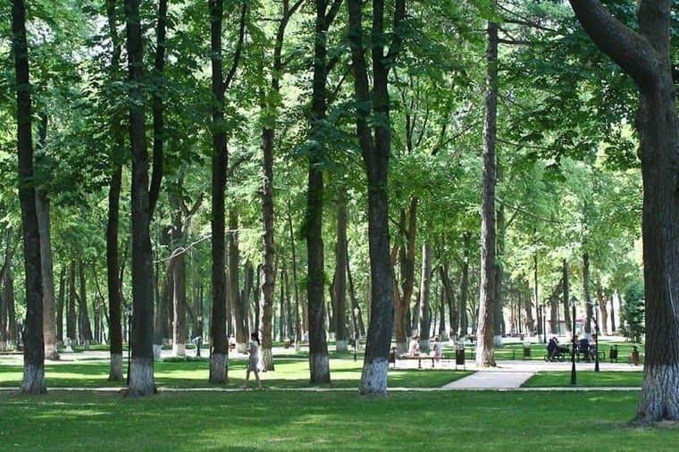 Петровский сад