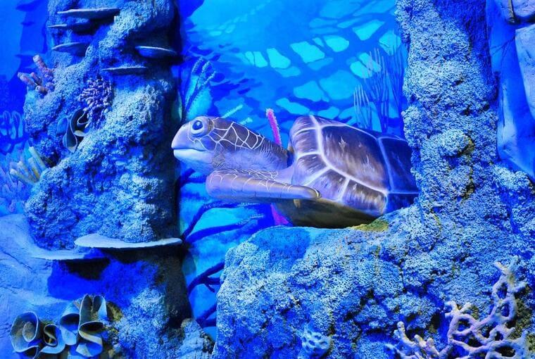 Национальный аквариум