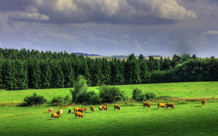Чехия, природа