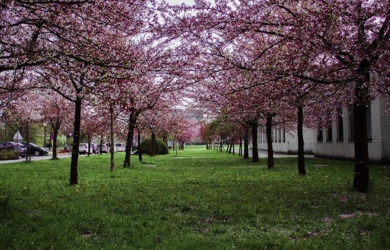 Германия весной