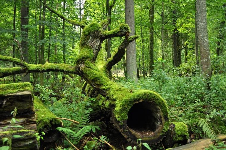 Беловежский национальный парк